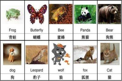 幼儿动物英语单词大全